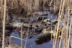 Pollution pétrolière image libre de droits