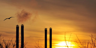 Pollution. Seagull flying over smoking chimneys Stock Photos