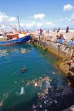 Pollution in seas. Pollution in harbour with seal, Kalk Bay, South Africa Stock Images