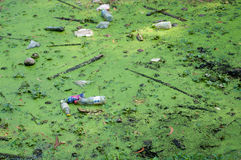 Pollution from sewage Royalty Free Stock Photography