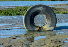Tire in mud. Bald inner tube from tire upright in mad along water at low tide Royalty Free Stock Images