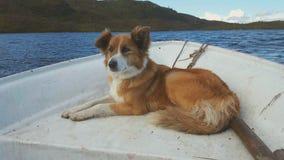 Polly the dog. Sea sheep dog Stock Image