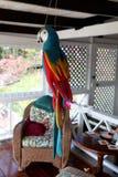 Polly il pappagallo Immagine Stock