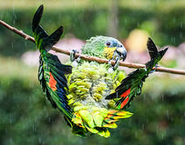 Polly Needs um guarda-chuva! fotografia de stock