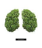 Polmone di terra Fotografia Stock