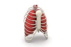 Polmoni e nervatura umani illustrazione di stock