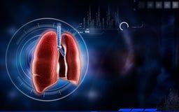 Polmoni umani Immagine Stock