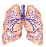Polmoni umani con la trachea, bronco, bronchi, carina, in poli basso illustrazione di stock