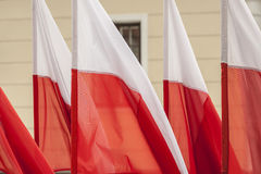 Polnische Flaggen Stockfotografie