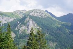 Polnische grüne Berge Stockbild