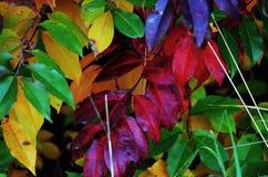 Polnische Herbstfarben im Wald in Malopolska lizenzfreie stockfotografie
