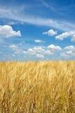 Polnische Landschaft Lizenzfreie Stockbilder