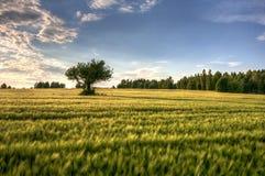 Polnische Landschaft Lizenzfreie Stockfotografie