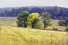Polnische Landschaften - Roztocze-Hügel - Dahany Lizenzfreies Stockbild