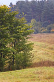 Polnische Landschaften - Roztocze-Hügel - Dahany Lizenzfreies Stockfoto