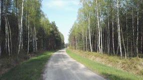 Polnischer Wald Stockbild
