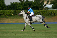 Polo 2 Royalty Free Stock Image