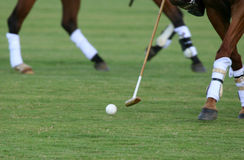 Polo. Closeup of a polo player controlling the ball royalty free stock photos