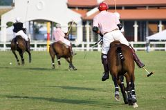 polo Fotografia Royalty Free