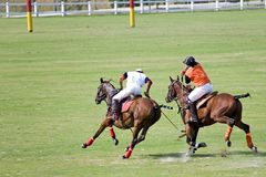 Polo Royalty Free Stock Images