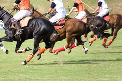 Polo Foto de Stock Royalty Free