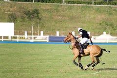 Polo Royalty Free Stock Photography