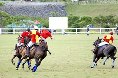 Polo Fotografia Stock