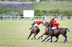 Polo Stock Images