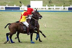 Polo Images stock