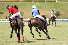 Polo Royalty-vrije Stock Foto's