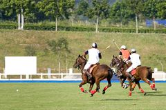 Polo Fotografia de Stock Royalty Free