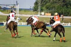 Polo Imagens de Stock Royalty Free