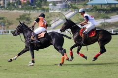 polo Royaltyfria Bilder