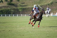Polo Royalty Free Stock Image