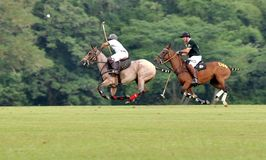 polo Royaltyfri Foto