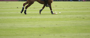 polo Photos stock