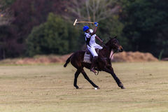 Polo Ball Rider Pony Swing Stock Photos