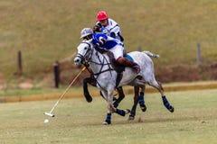 Polo Ball Players Ponies Focus  Fotografia Stock