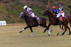 Polo Ball Players Ponies Game Fast Stock Photos