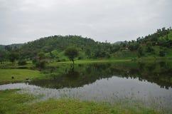 Polo boslandschap Stock Afbeeldingen
