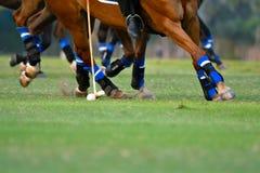 polo, cavallo, sport, gioco, giocatore, giocante, cavallini, partita, maglio Fotografia Stock Libera da Diritti