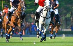 Polo, cavallo, sport, partita, gioco, bastoni, giocatore, stivali, giocanti, Immagini Stock
