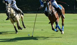 polo, cavalo, esporte, jogo, jogador, jogando, pôneis, fósforo, malho foto de stock