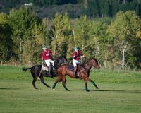 Polo chez Diamond Polo Club noir Photo libre de droits