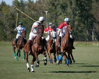 Polo chez Diamond Polo Club noir Photographie stock libre de droits
