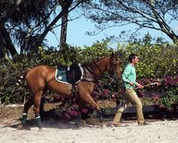 Polo Club - Wellington internazionali, Florida - Joe Immagini Stock