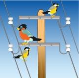 Polo com o fio e o pássaro que sentam-se nele ilustração stock