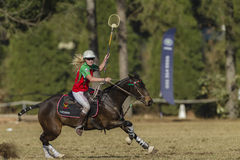 Polo-Cross Horse Player Action Stock Image