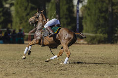 Polo-Cross Horse Rider Player Action Royalty Free Stock Photos
