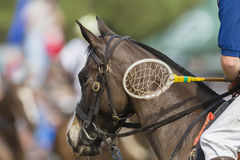 Polo-Cross Horse Rider Racket Royalty Free Stock Photography